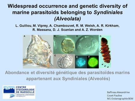 Widespread occurrence and genetic diversity of marine parasitoids belonging to Syndiniales (Alveolata) Abondance et diversité génétique des parasitoïdes.