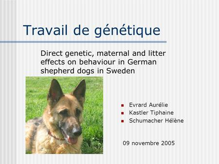 Travail de génétique Evrard Aurélie Kastler Tiphaine Schumacher Hélène Direct genetic, maternal and litter effects on behaviour in German shepherd dogs.