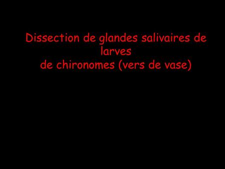 Dissection de glandes salivaires de larves