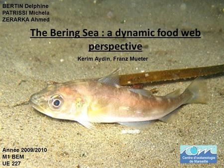 The Bering Sea : a dynamic food web perspective