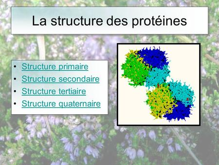La structure des protéines •Structure primaireStructure primaire •Structure secondaireStructure secondaire •Structure tertiaireStructure tertiaire •Structure.