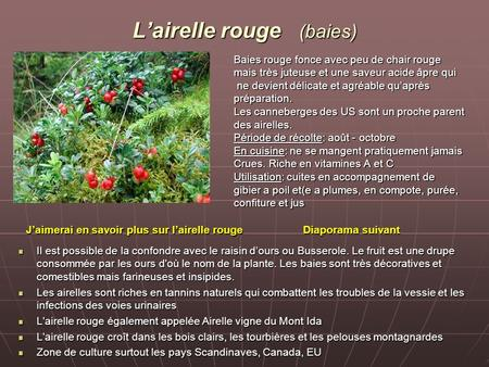 L'airelle rouge (baies)