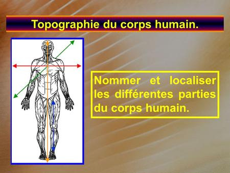 Topographie du corps humain.