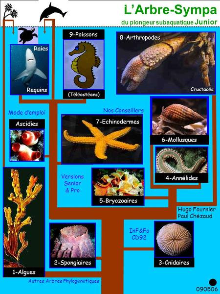 L'Arbre-Sympa du plongeur subaquatique Junior 1 090506. Requins 9-Poissons (T é l é ost é ens) 8-Arthropodes Ascidies 7-Echinodermes 6-Mollusques 5-Bryozoaires.