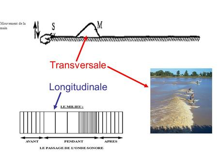 Transversale Longitudinale Figure 1 Mouvement de la main.