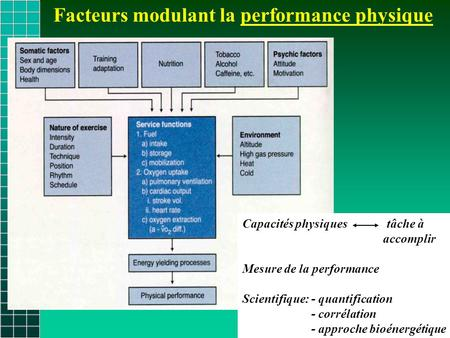 Facteurs modulant la performance physique Capacités physiques tâche à accomplir Mesure de la performance Scientifique: - quantification - corrélation -