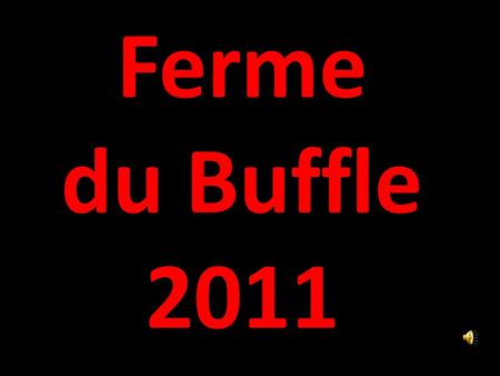 Ferme du Buffle 2011 un matin… weekend travaux…