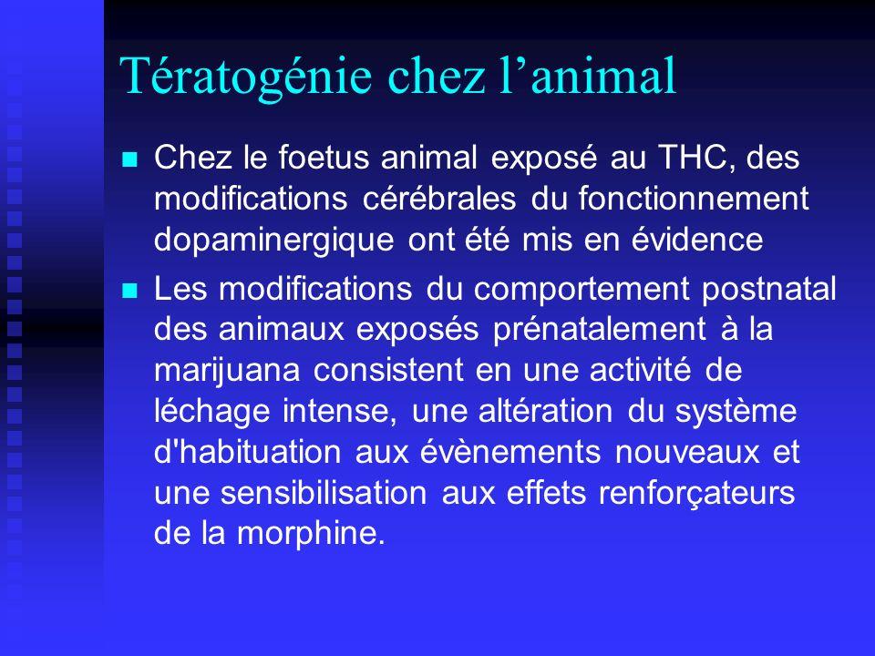 Tératogénie chez l'animal