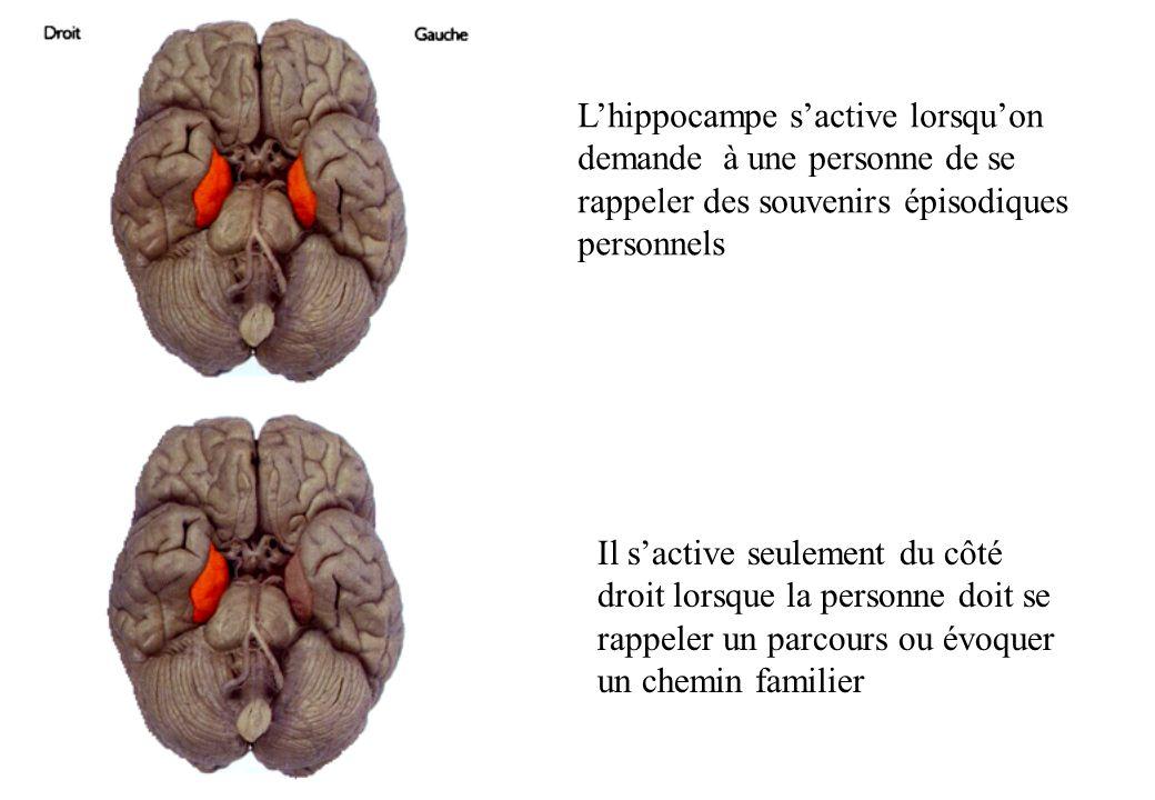 L'hippocampe s'active lorsqu'on demande à une personne de se rappeler des souvenirs épisodiques personnels