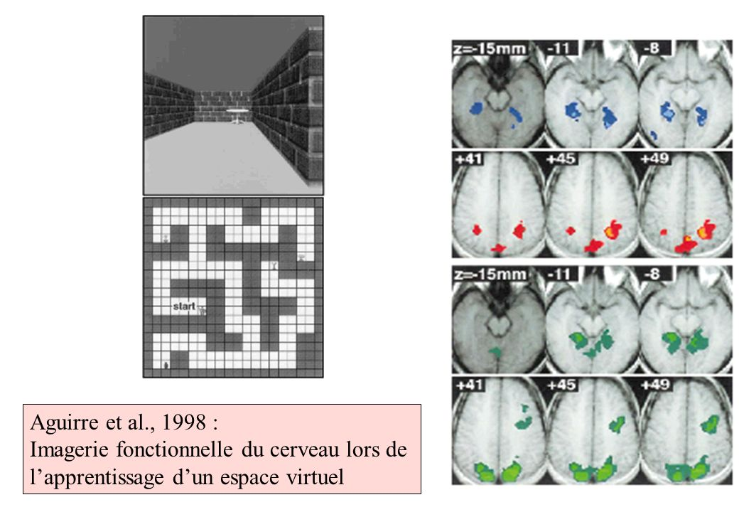 Aguirre et al., 1998 :Imagerie fonctionnelle du cerveau lors de l'apprentissage d'un espace virtuel.