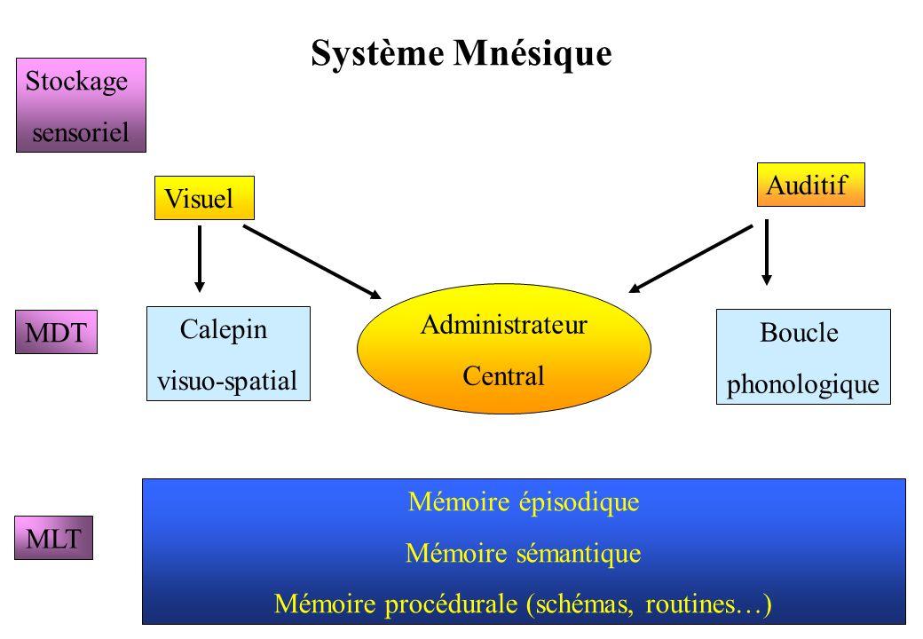 Mémoire procédurale (schémas, routines…)