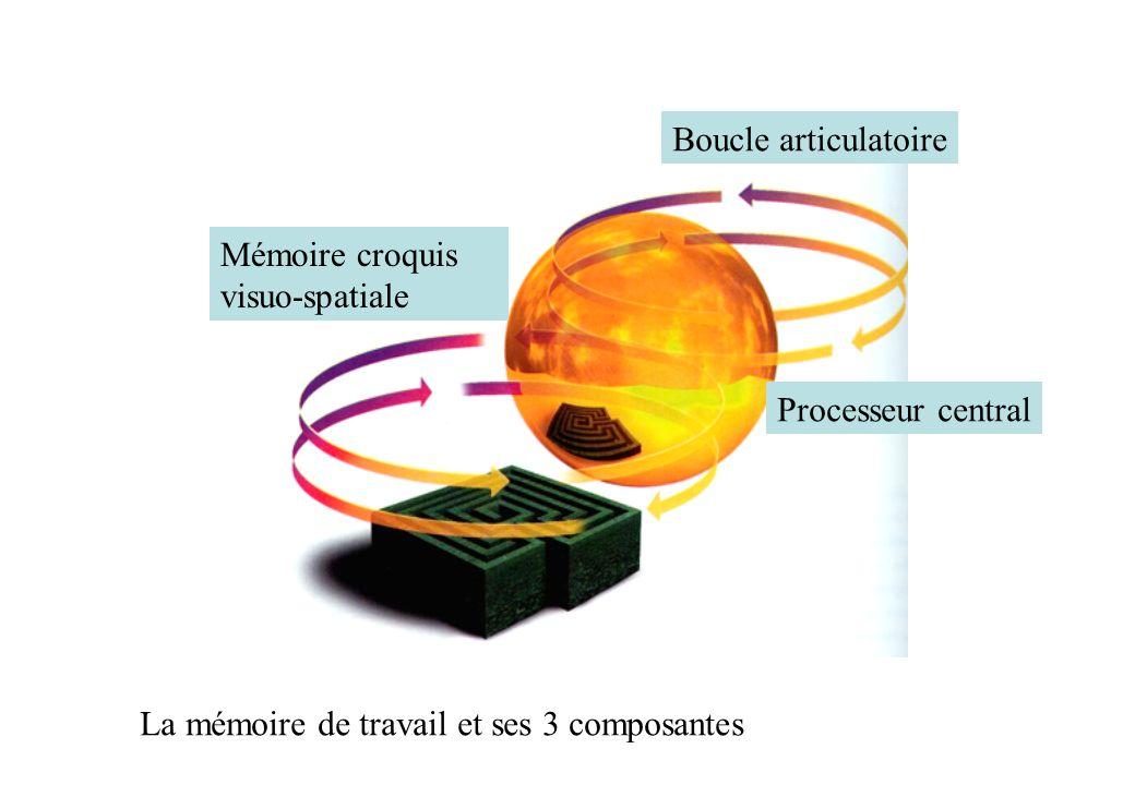 Boucle articulatoire Mémoire croquis visuo-spatiale.