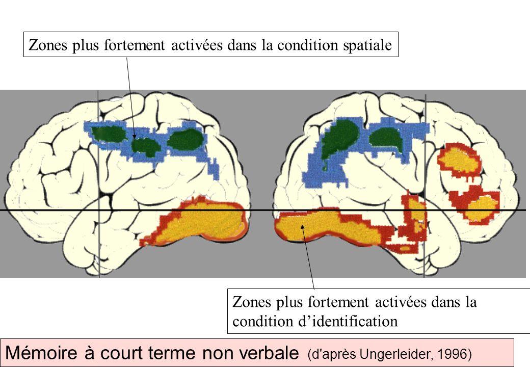 Mémoire à court terme non verbale (d après Ungerleider, 1996)
