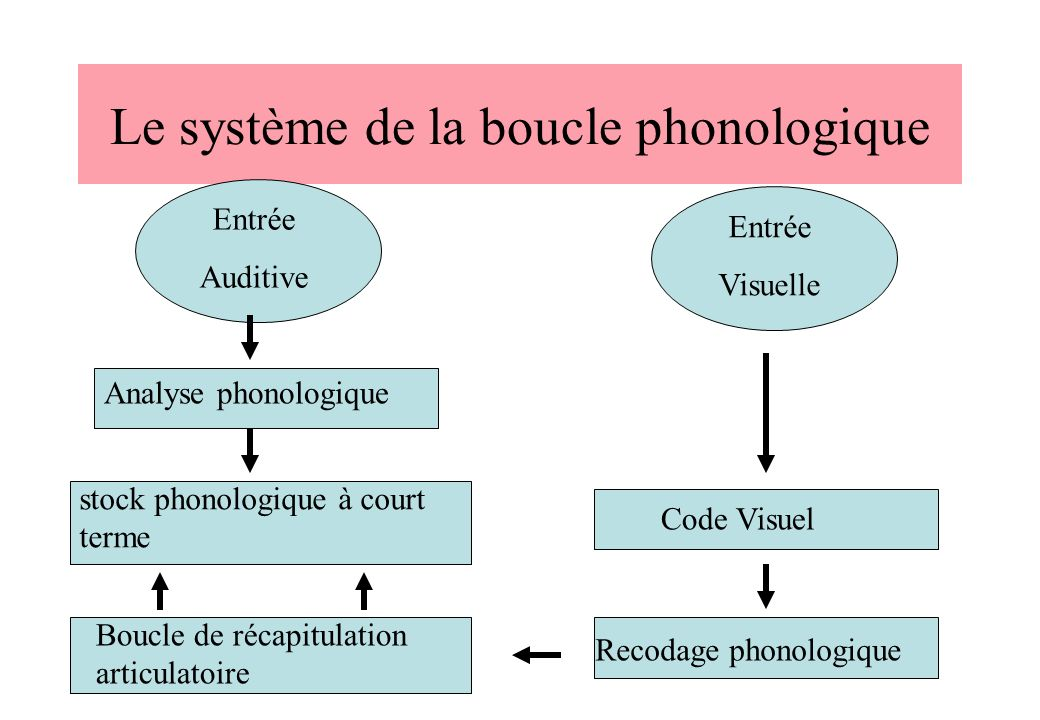 Le système de la boucle phonologique