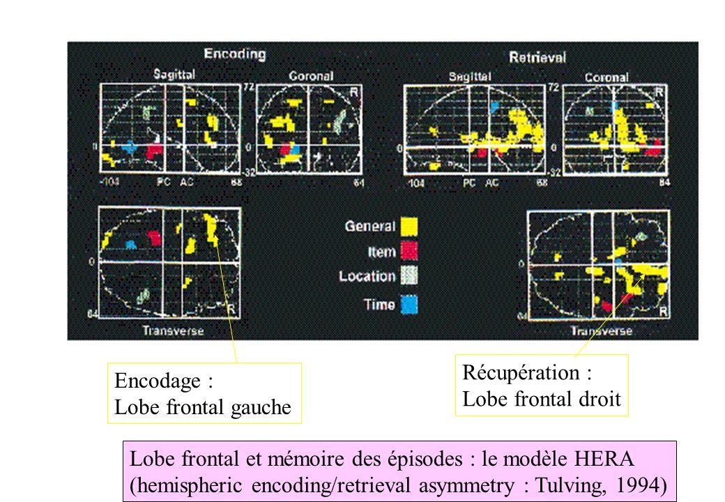 Récupération :Lobe frontal droit. Encodage : Lobe frontal gauche. Lobe frontal et mémoire des épisodes : le modèle HERA.