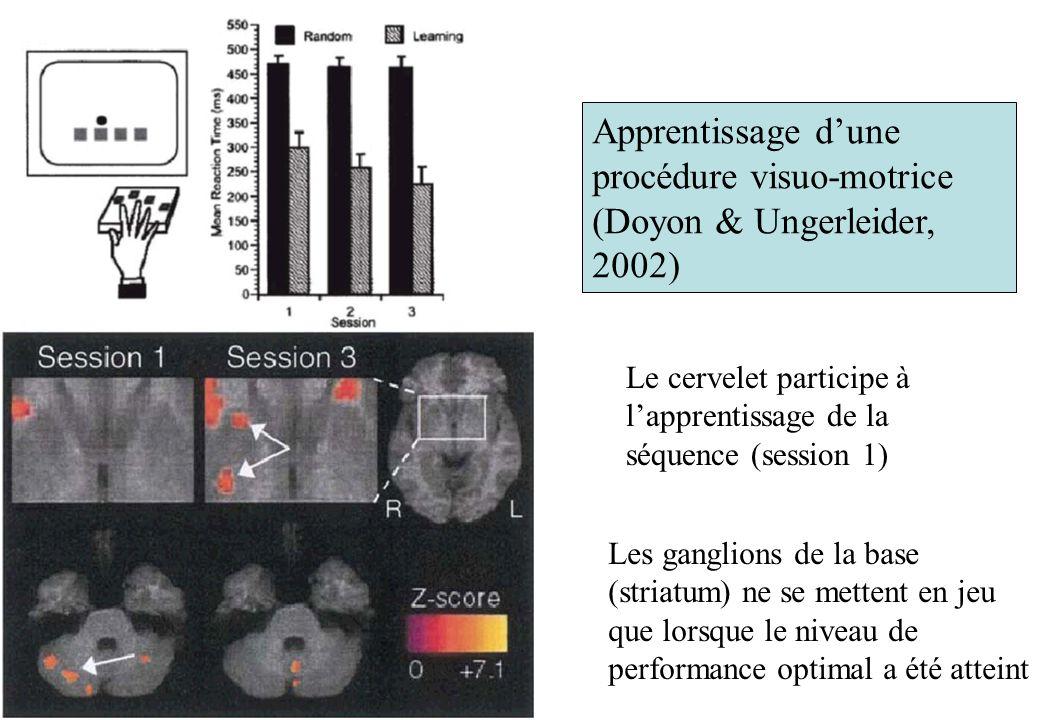 Apprentissage d'une procédure visuo-motrice (Doyon & Ungerleider, 2002)