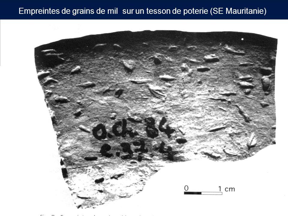 Empreintes de grains de mil sur un tesson de poterie (SE Mauritanie)