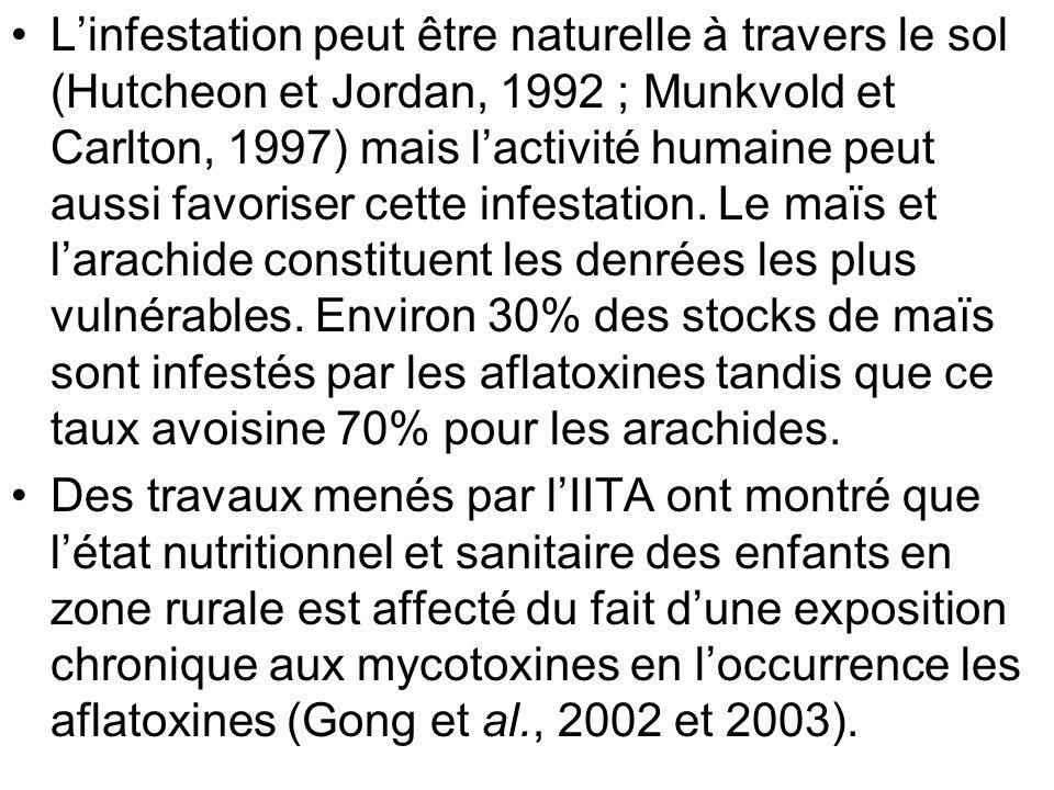 L'infestation peut être naturelle à travers le sol (Hutcheon et Jordan, 1992 ; Munkvold et Carlton, 1997) mais l'activité humaine peut aussi favoriser cette infestation. Le maïs et l'arachide constituent les denrées les plus vulnérables. Environ 30% des stocks de maïs sont infestés par les aflatoxines tandis que ce taux avoisine 70% pour les arachides.