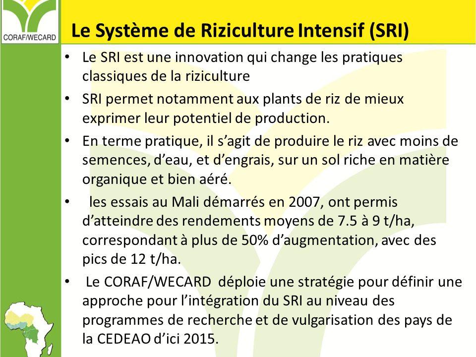 Le Système de Riziculture Intensif (SRI)