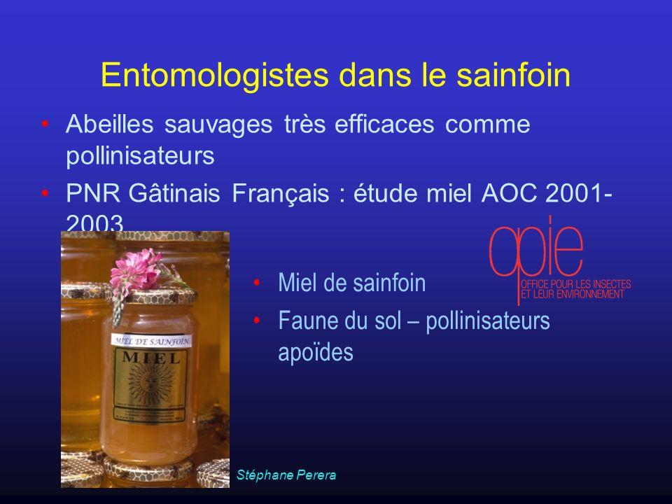Entomologistes dans le sainfoin