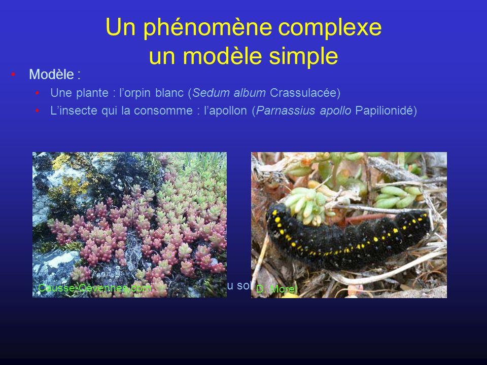 Un phénomène complexe un modèle simple