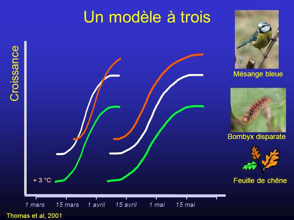 Un modèle à trois Croissance Mésange bleue Bombyx disparate