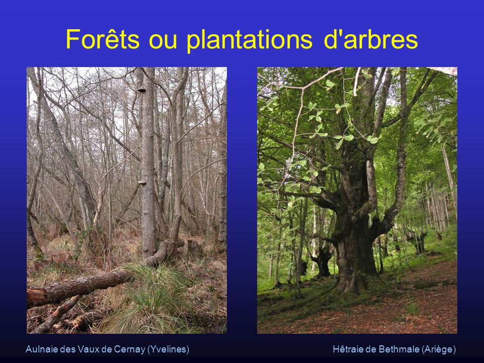 Forêts ou plantations d arbres