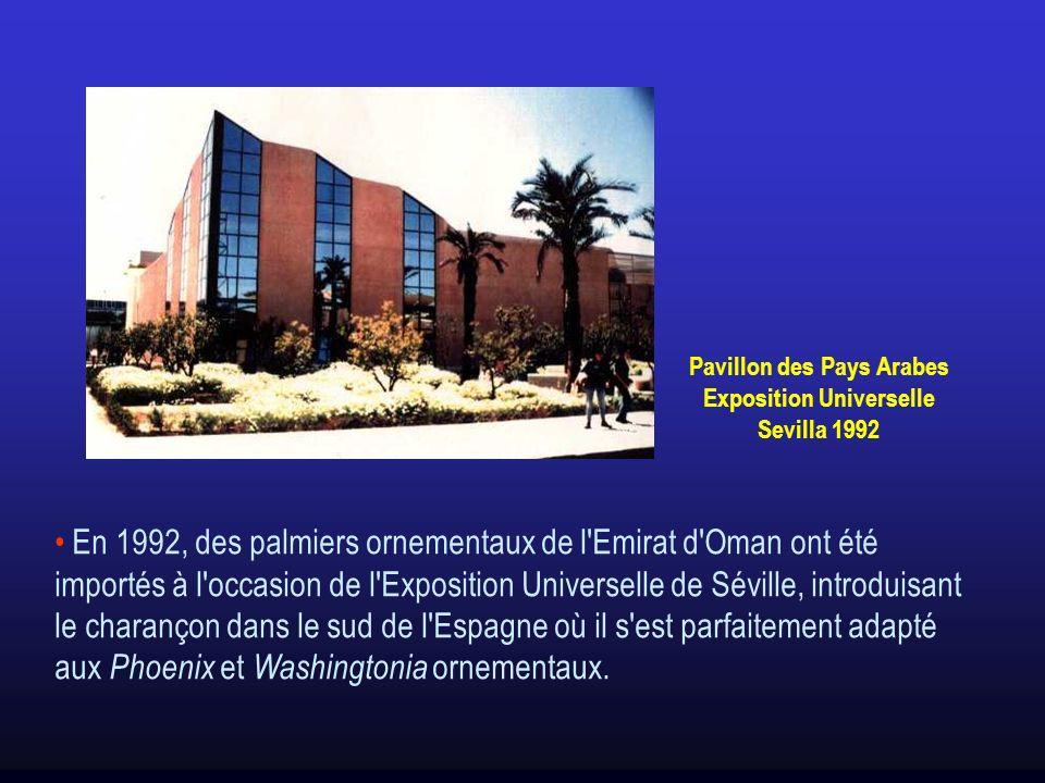 Pavillon des Pays Arabes Exposition Universelle