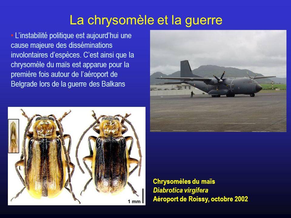 La chrysomèle et la guerre