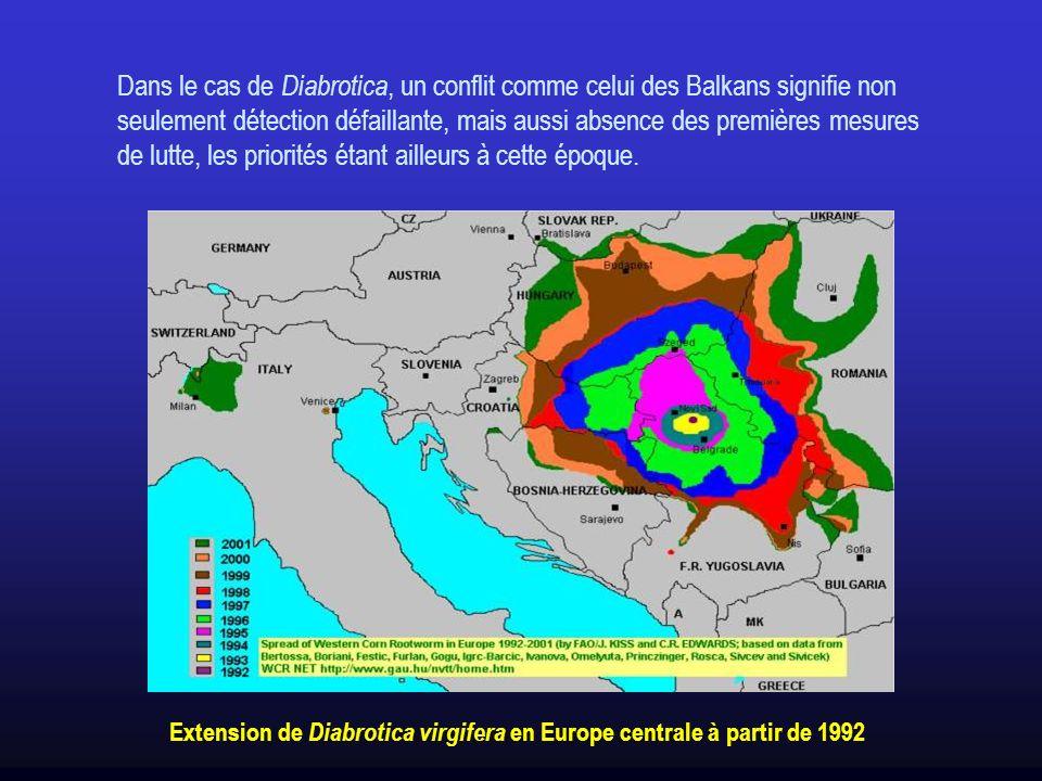 Dans le cas de Diabrotica, un conflit comme celui des Balkans signifie non seulement détection défaillante, mais aussi absence des premières mesures de lutte, les priorités étant ailleurs à cette époque.