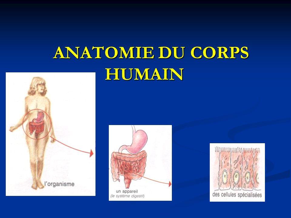 Großartig Außen Anatomie Des Knochenfische Zeitgenössisch ...