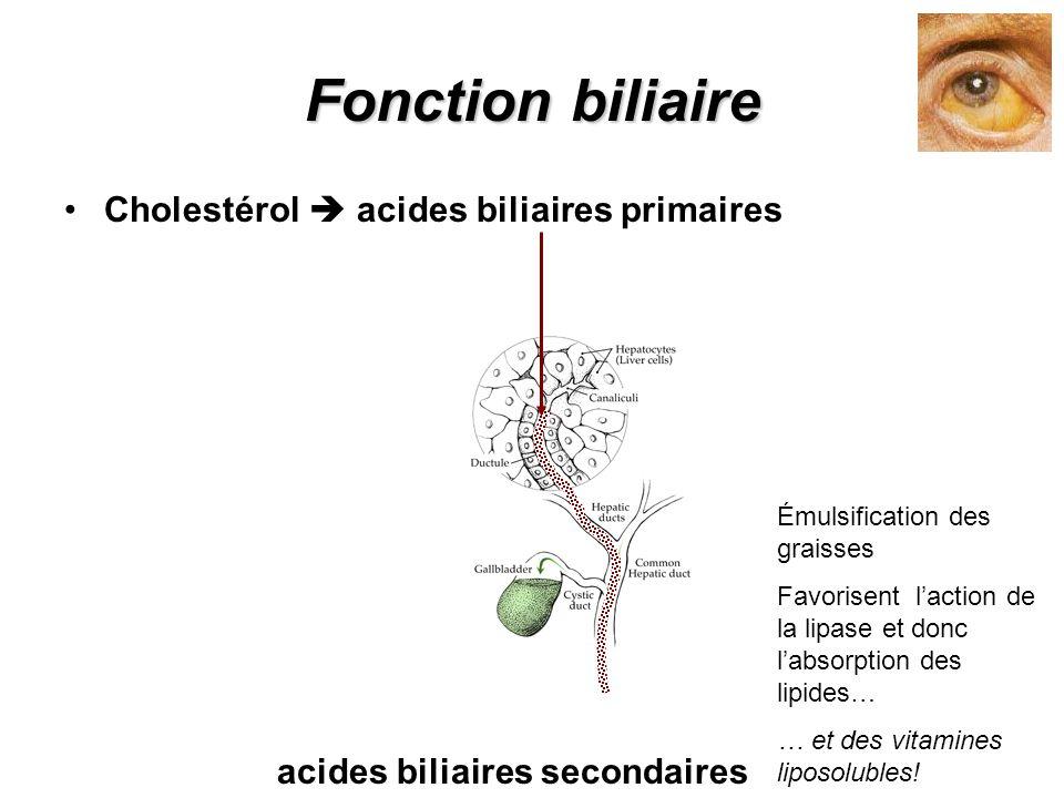 Fonction biliaire Cholestérol  acides biliaires primaires