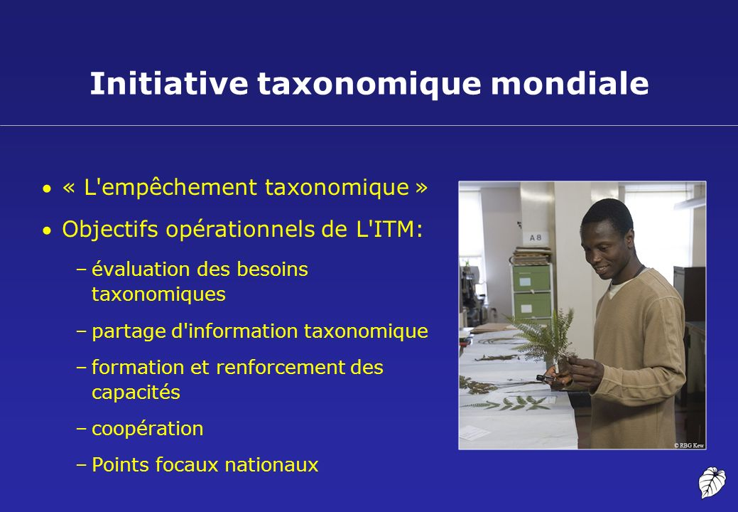 Initiative taxonomique mondiale