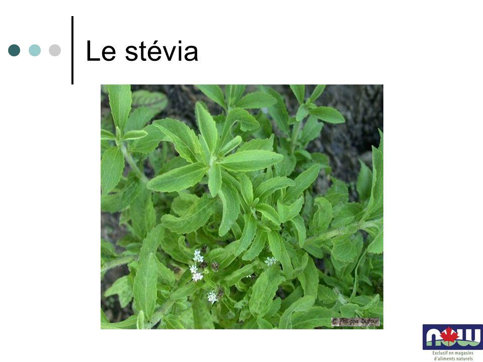 Le stévia