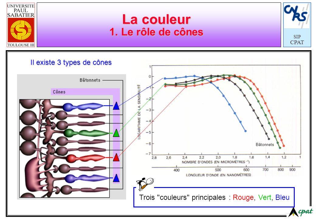 La couleur 1. Le rôle de cônes