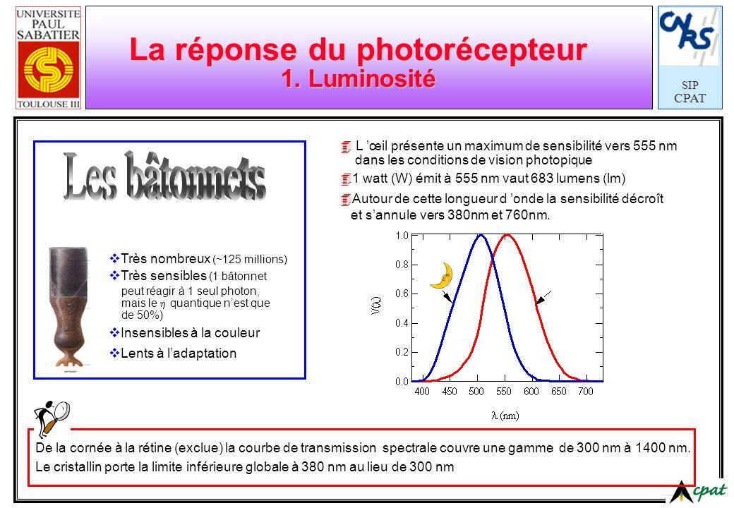 La réponse du photorécepteur 1. Luminosité