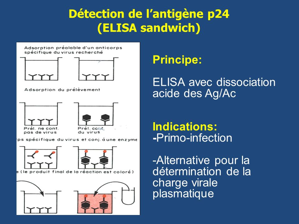 Diagnostic et suivi biologique de l infection par le vih - Antigene p24 periodo finestra ...
