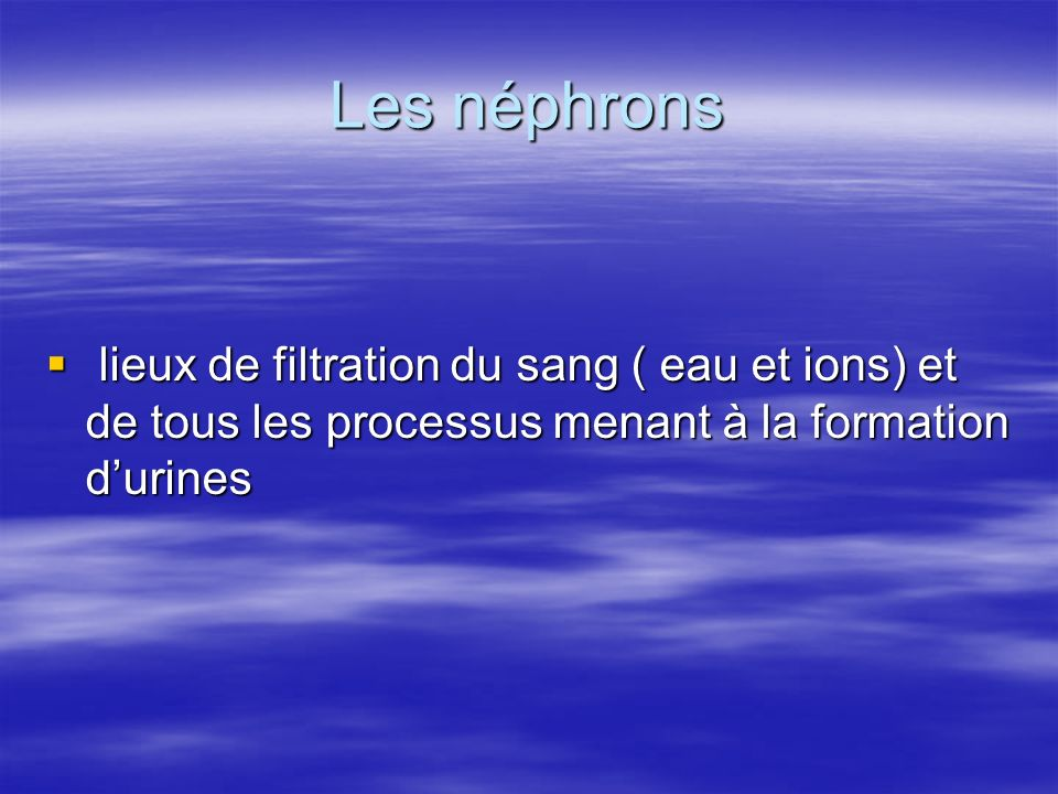 Les néphrons lieux de filtration du sang ( eau et ions) et de tous les processus menant à la formation d'urines.