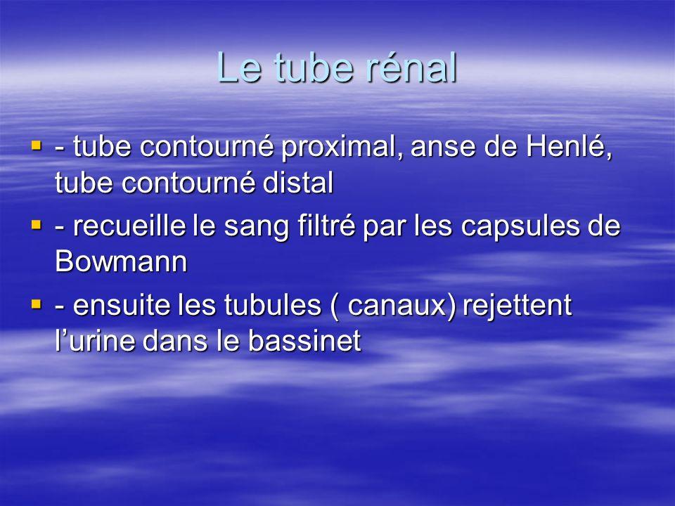 Le tube rénal - tube contourné proximal, anse de Henlé, tube contourné distal. - recueille le sang filtré par les capsules de Bowmann.