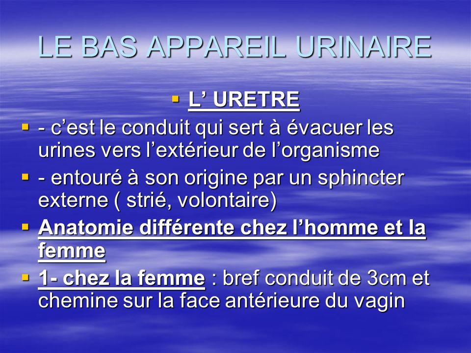 LE BAS APPAREIL URINAIRE
