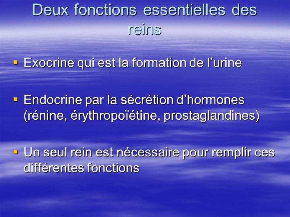 Deux fonctions essentielles des reins