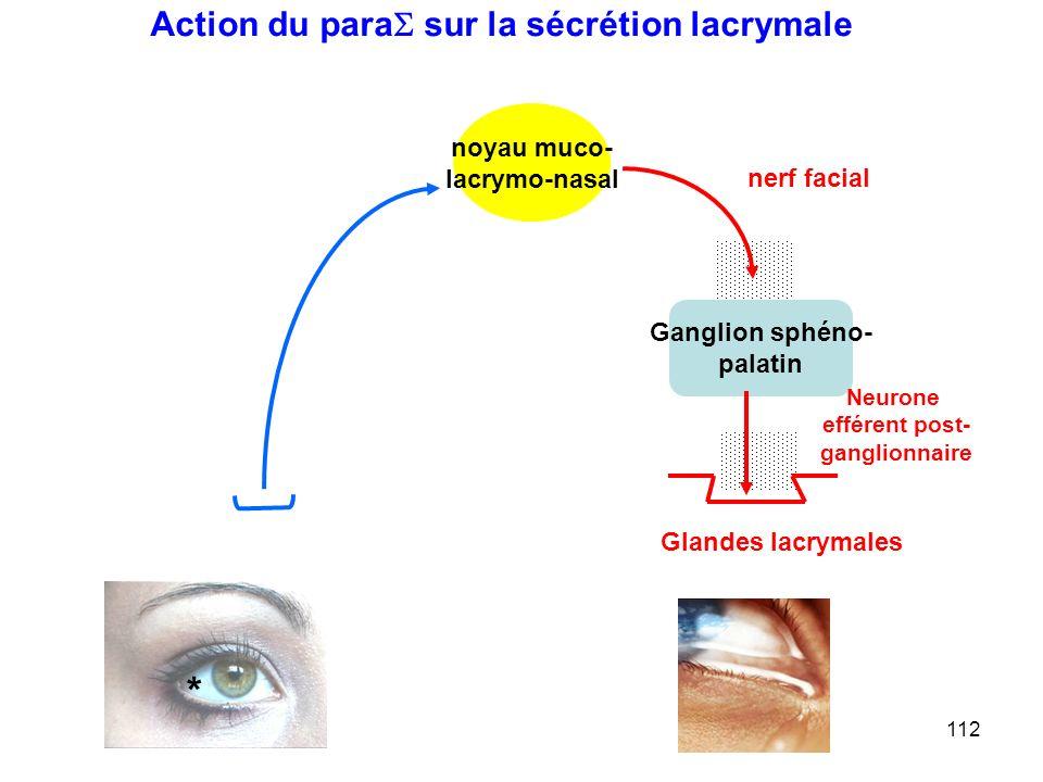 * Action du para sur la sécrétion lacrymale noyau muco- lacrymo-nasal