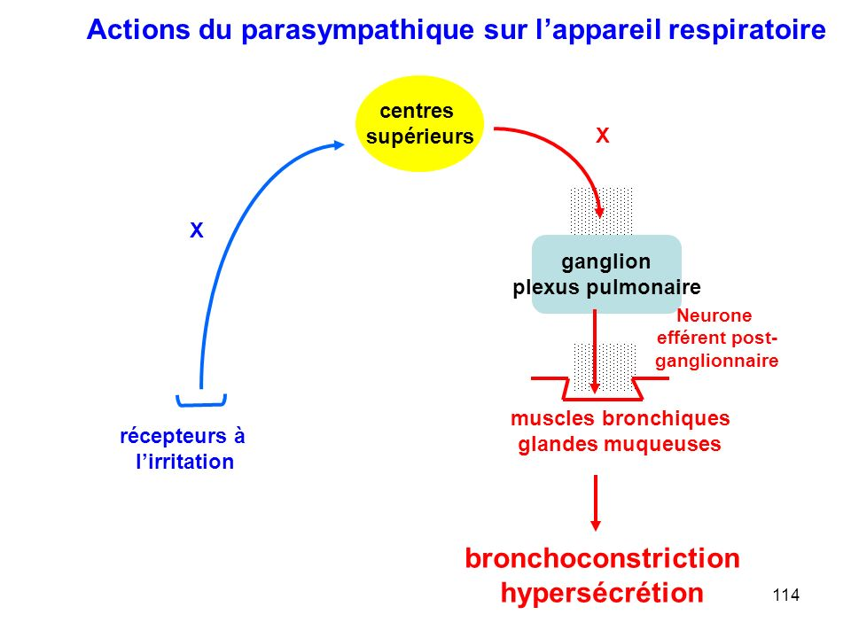 bronchoconstriction hypersécrétion