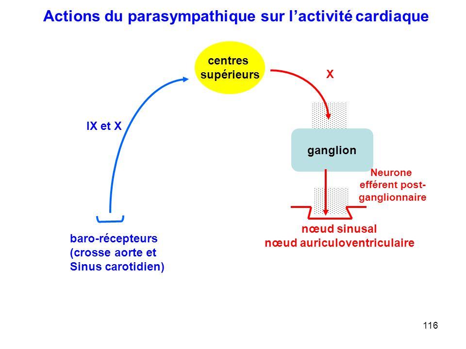 nœud auriculoventriculaire