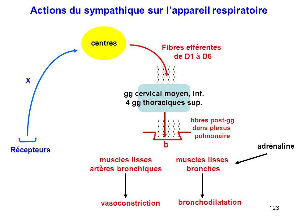 Actions du sympathique sur l'appareil respiratoire