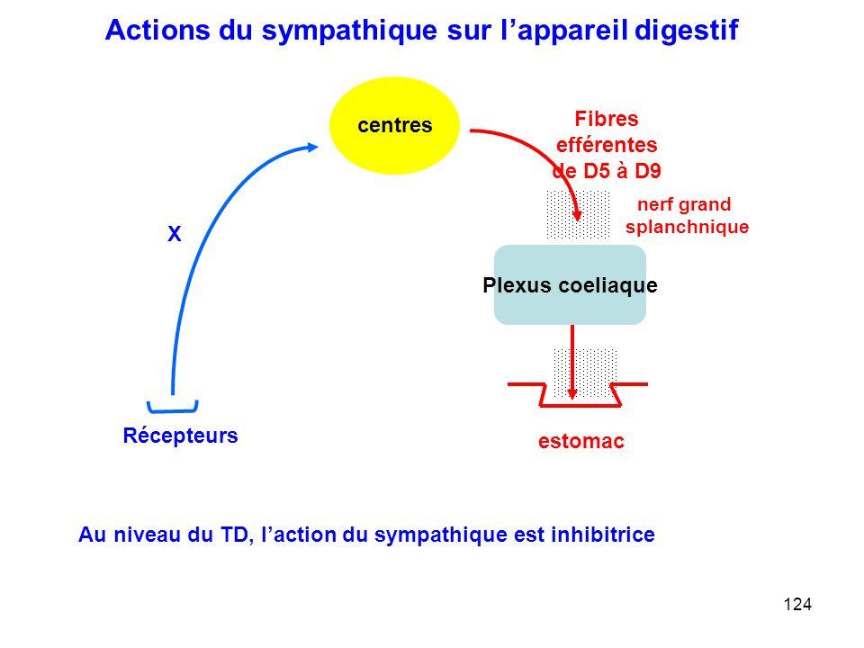 Actions du sympathique sur l'appareil digestif