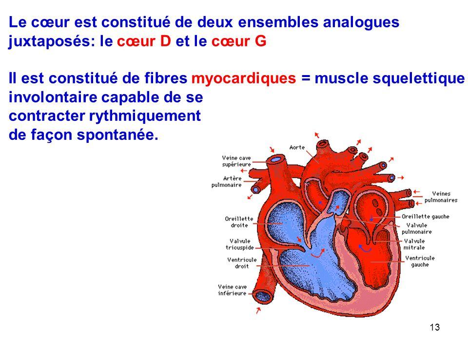 Le cœur est constitué de deux ensembles analogues