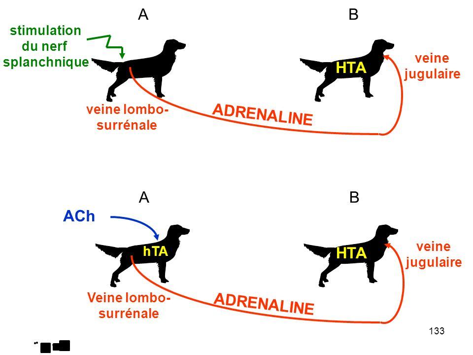 A B HTA ADRENALINE A B ACh HTA ADRENALINE stimulation du nerf