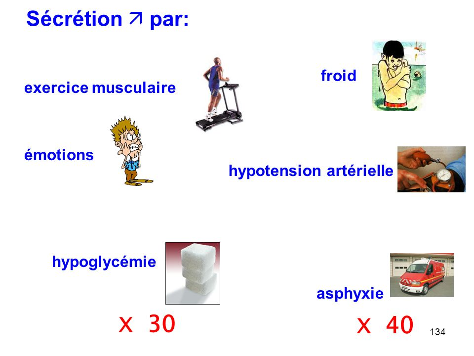 X 30 X 40 Sécrétion  par: froid exercice musculaire émotions