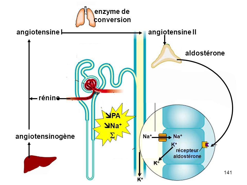 PA Na+  angiotensine II enzyme de conversion angiotensine I rénine
